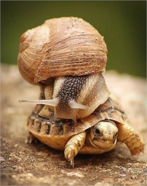 Tortoise Carrying Snail on his back