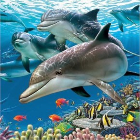 Under The Sea 3D Dolphins Live