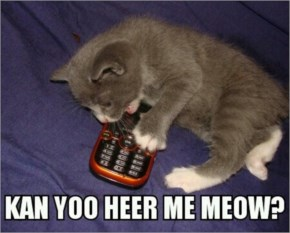 What Does A Hero Truly Need?...Funny Cat Image