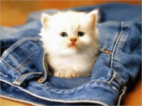 White Cute Cat Baby in the jeans pant