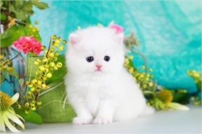 White Cute Cat with green eyes
