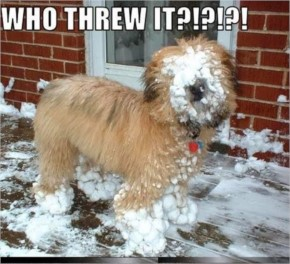 Trolled winter Pictures of the year (30+ Photos)