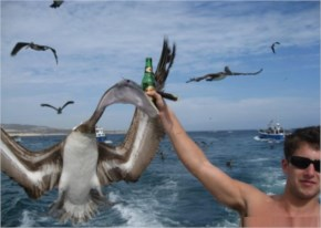 You pelican't take my beer, you stupid freaky bird