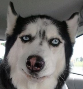 10 Dogs Who Are Silently Judging Your Disaster
