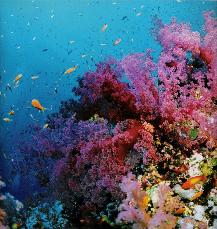 10 Most Beautiful Places In The World - laughspark.com 10 Most Beautiful Coral Reefs World