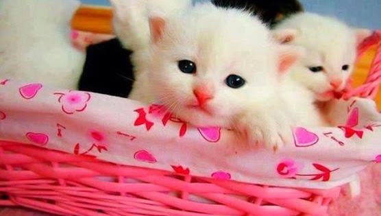 Cute Cat Image With Pink Basket