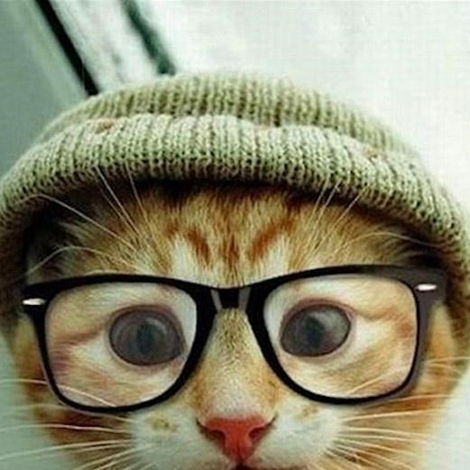 http://www.laughspark.info/thumbfiles/705X705/cute-cat-with-beanie-and-glasses-635731307117442594-13752.jpg