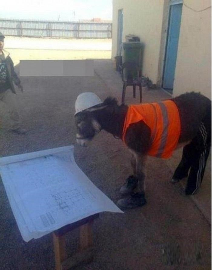 2460dbf4 Donkey Contractor Civil Engineer Funny