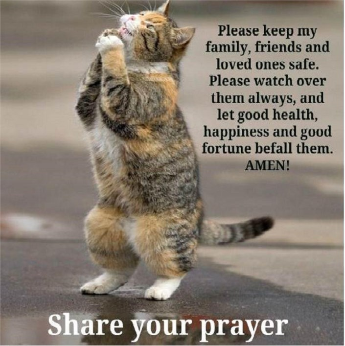 Funny Cat Sayings Quotes: Funny Cat Prayersaying Quotes Image