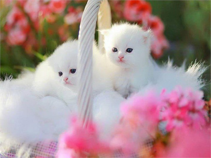 Look These Cute Cats Very Beautiful And Innocent