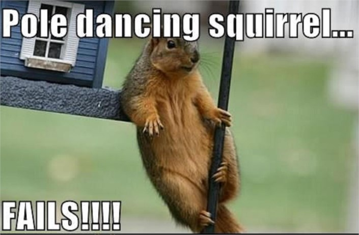 Pole Dancing Squirrel Hanging Out Fails