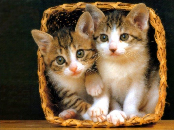 So Cute Cats In The Decorate Pot