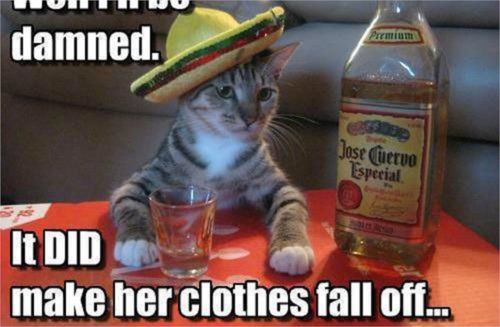 Tequila Cat Is Drunk