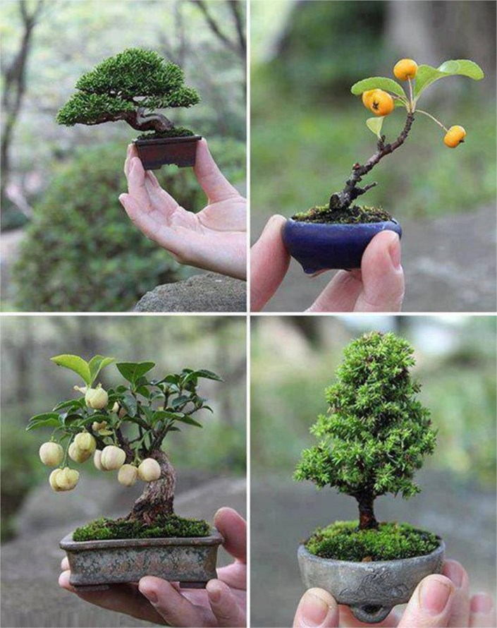 Bonsai the japanese art form using miniature trees grown What are miniature plants grown in pots called