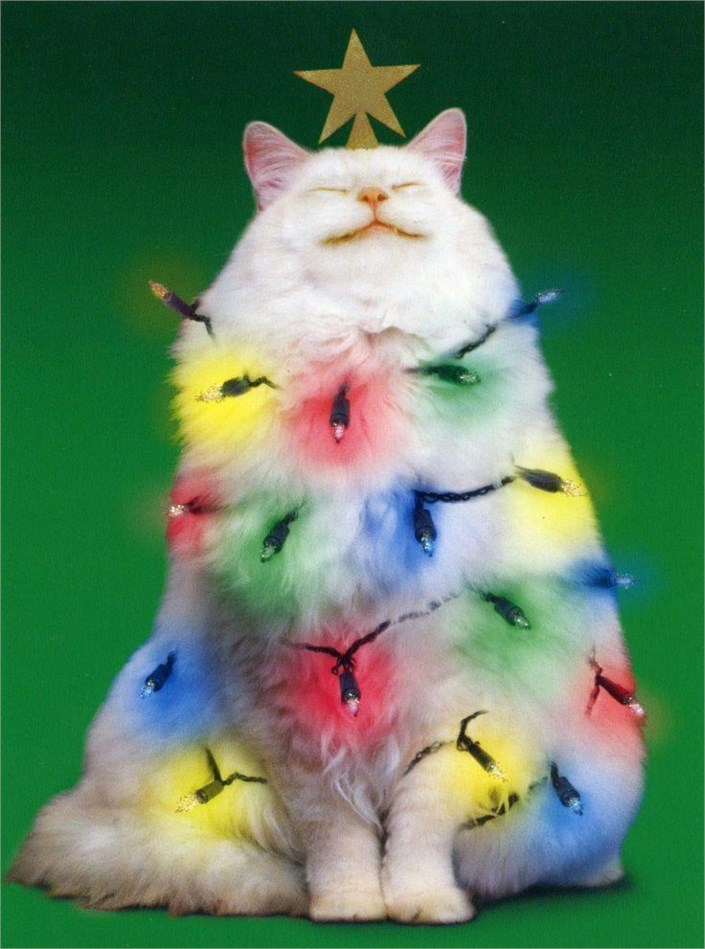 Cats celebrating christmas Christmas tree cat tower