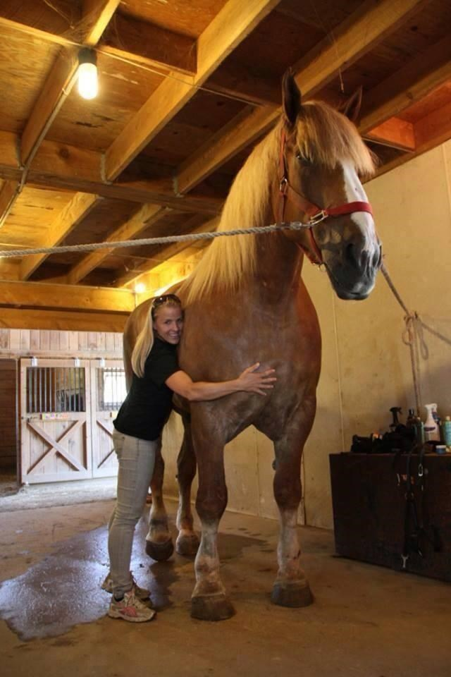 the largest horse in the world