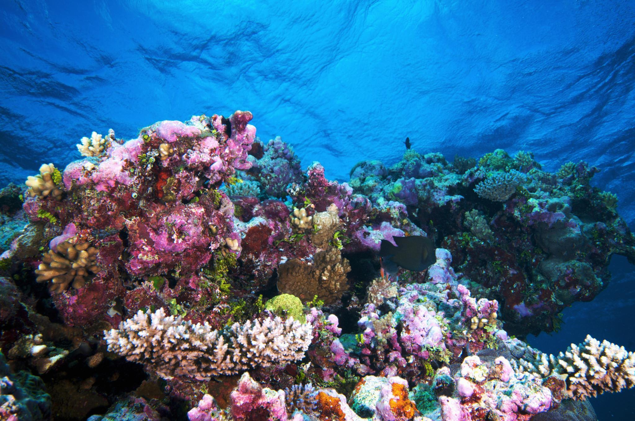 10 Most Beautiful Places In The World 10 Most Beautiful Coral Reefs World