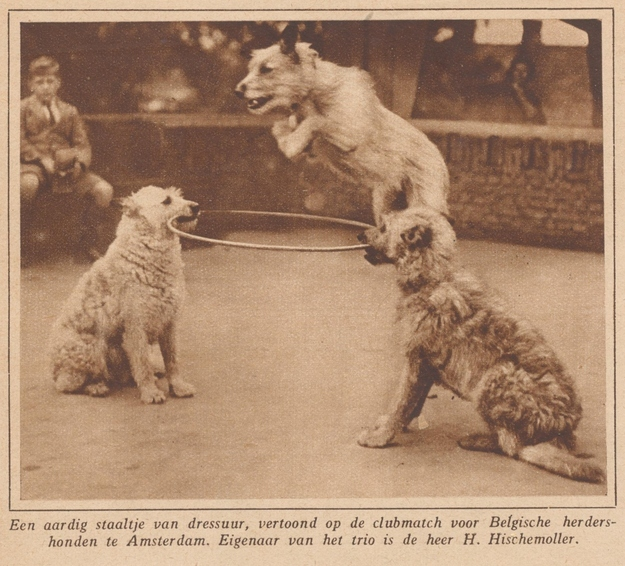 The World's Best Adorable Dogs Of The '20s These dogs hoopin