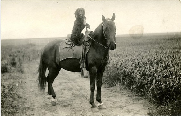 The World's Best Adorable Dogs Of The '20s This dog riding a horse