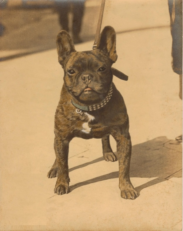 The World's Best Adorable Dogs Of The '20s Count Bozo