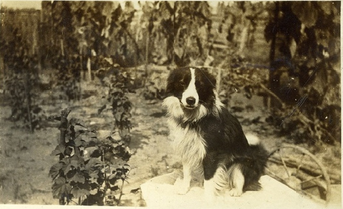 The World's Best Adorable Dogs Of The '20s This cutie