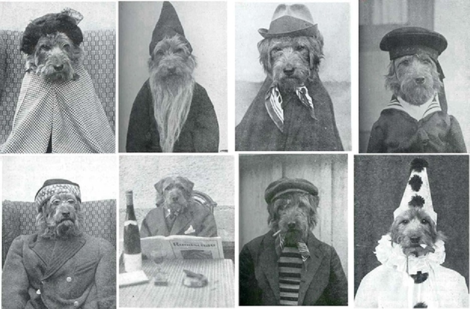 The World's Best Adorable Dogs Of The '20s This dressed up terrier x 8