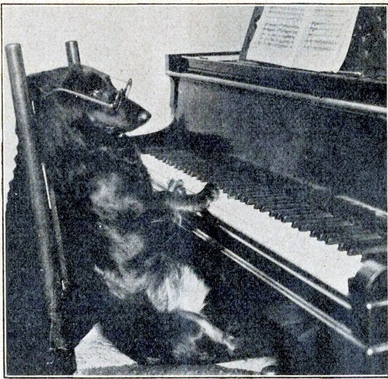 The World's Best Adorable Dogs Of The '20s This dog wearing glasses and playing piano