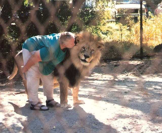 wild animals but also have friends and they love them,Lady handler kissing lion at Shambala , Acton, CAlifornia The Lion And The Lamb
