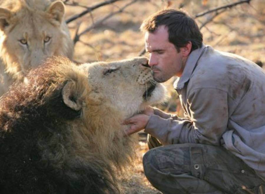 kevin richardson with lions,Wild Animals But Also Have Friends And They Love Them