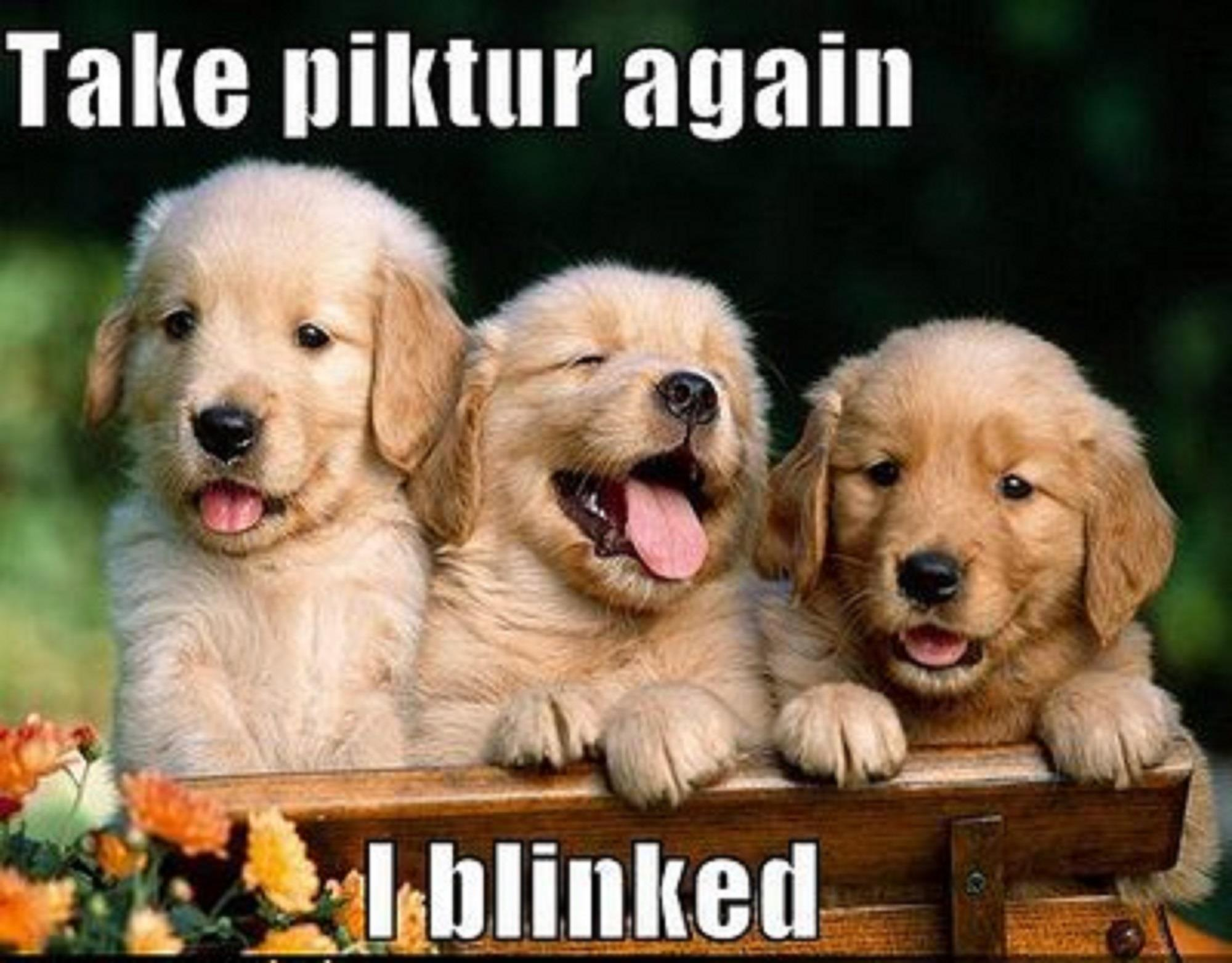 Awesome Baby Puppies Is So Cute And Beautiful