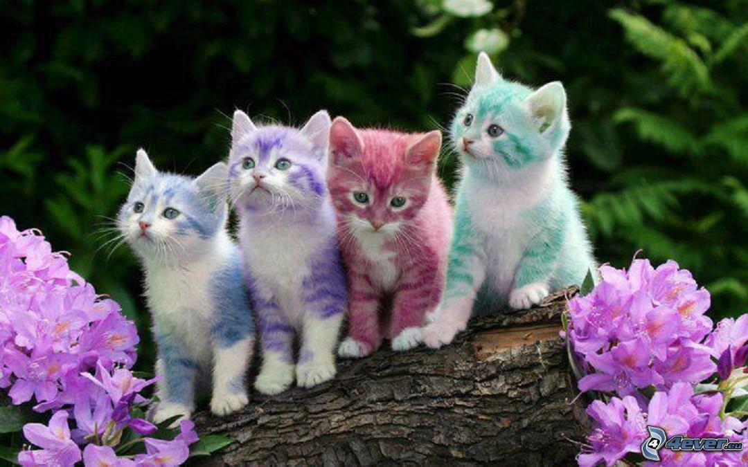Awesome Multi Colourful Cute Cats And Too Cute Kittens Pictures