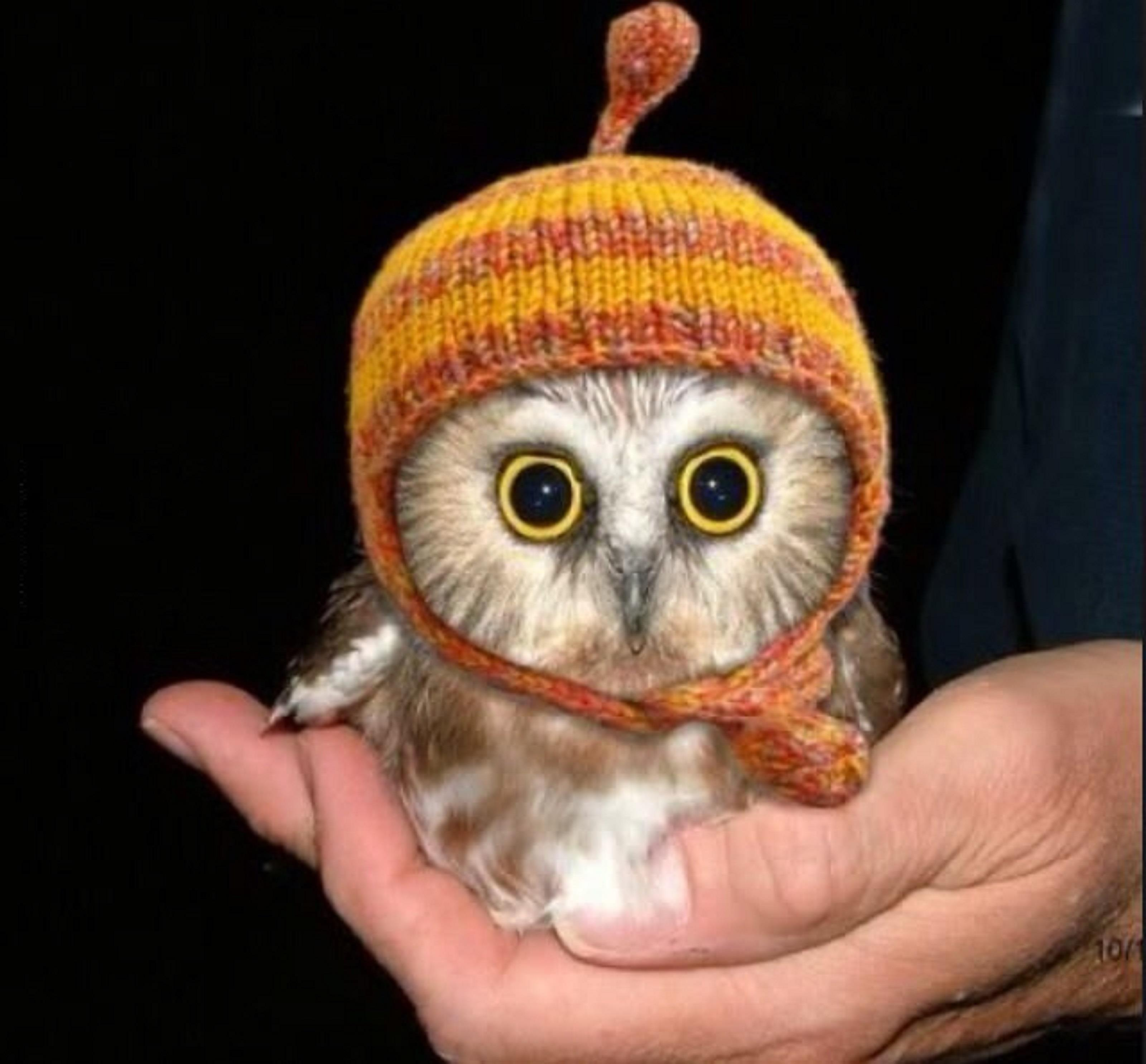 Baby Owl Cuteness Overload
