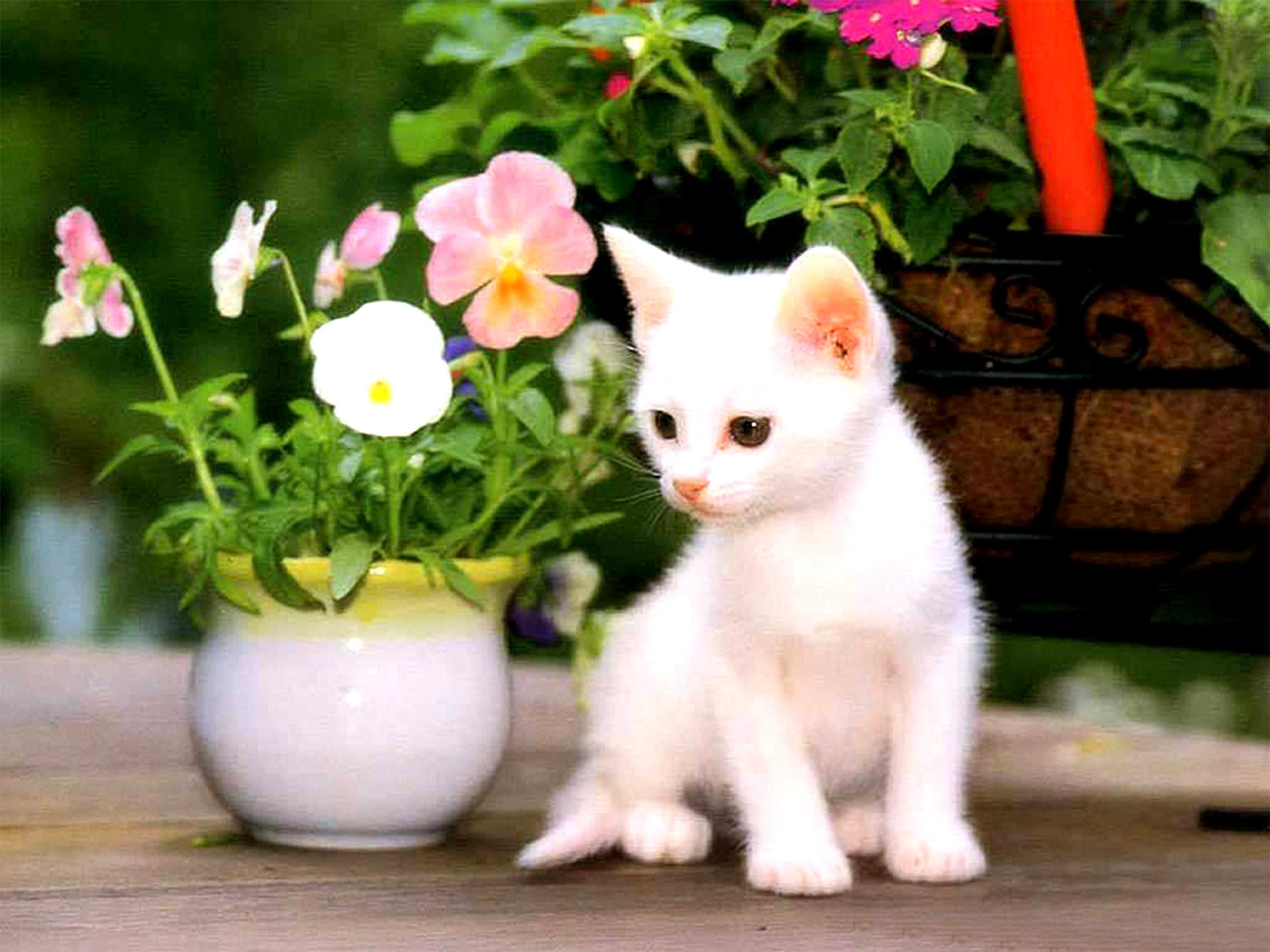 Beautiful Cat Wallpaper