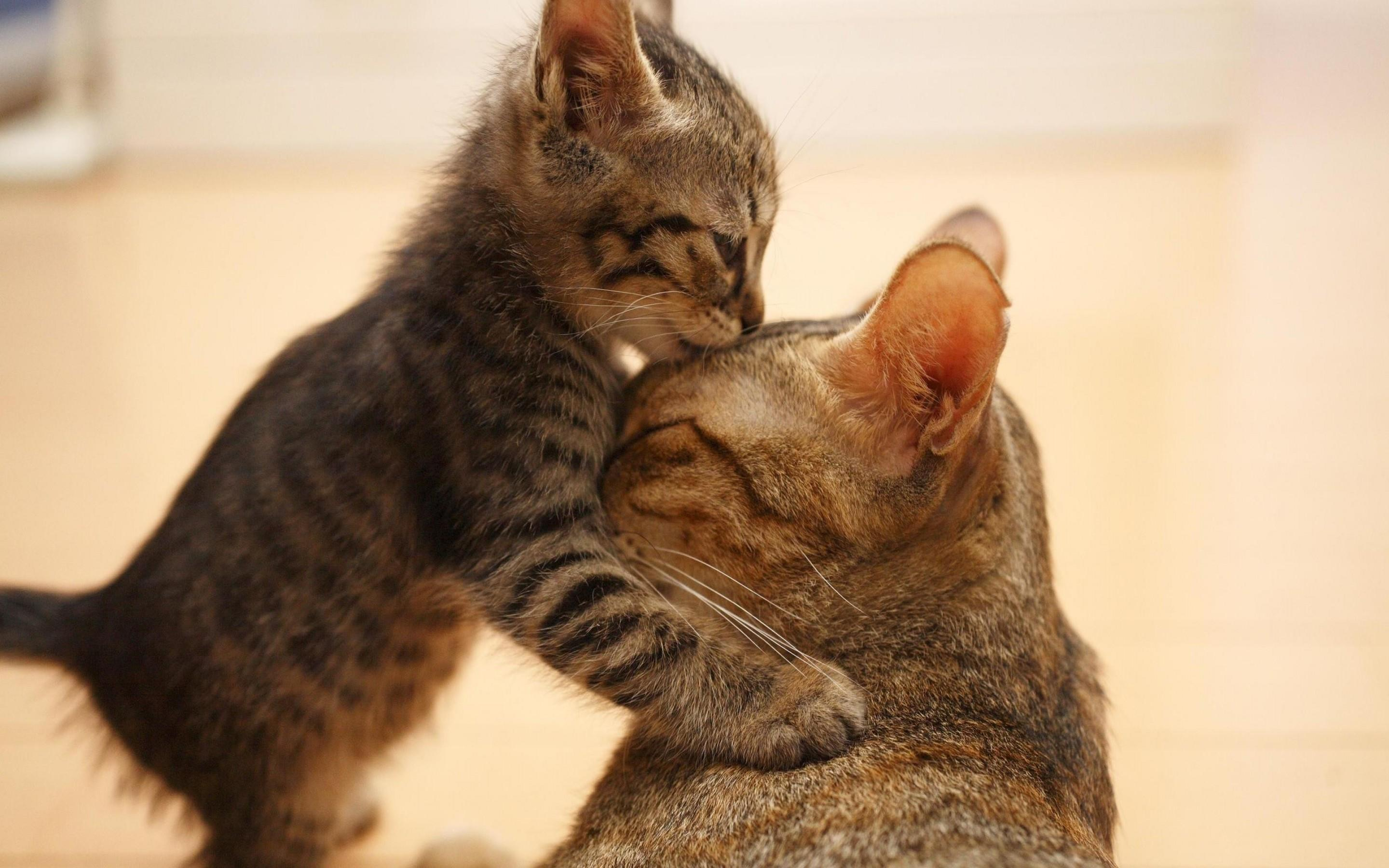how to raise a cat to love you