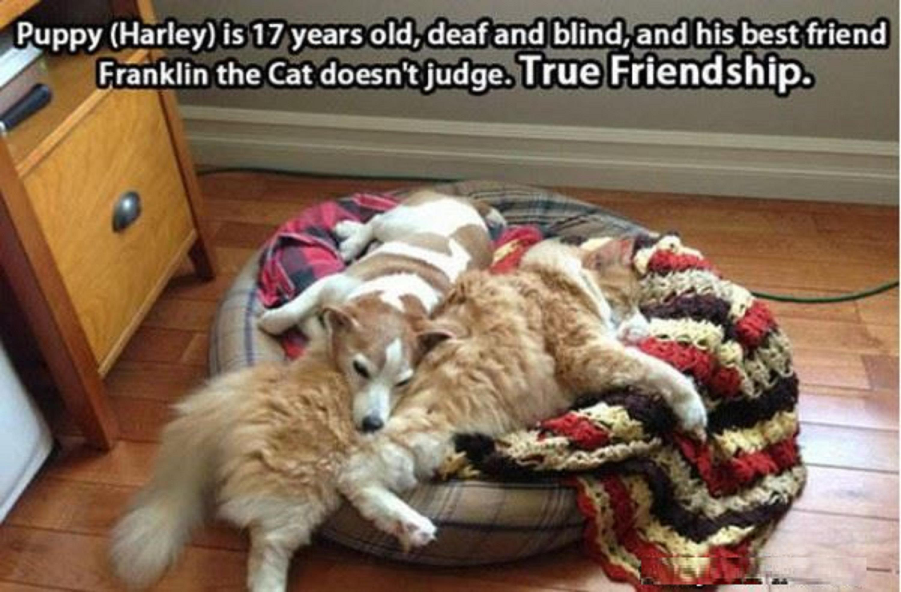 Cat Vs Dog True Friendship Funny Picture