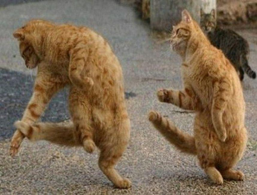 cats-dancing-funny-picture-4764.jpeg