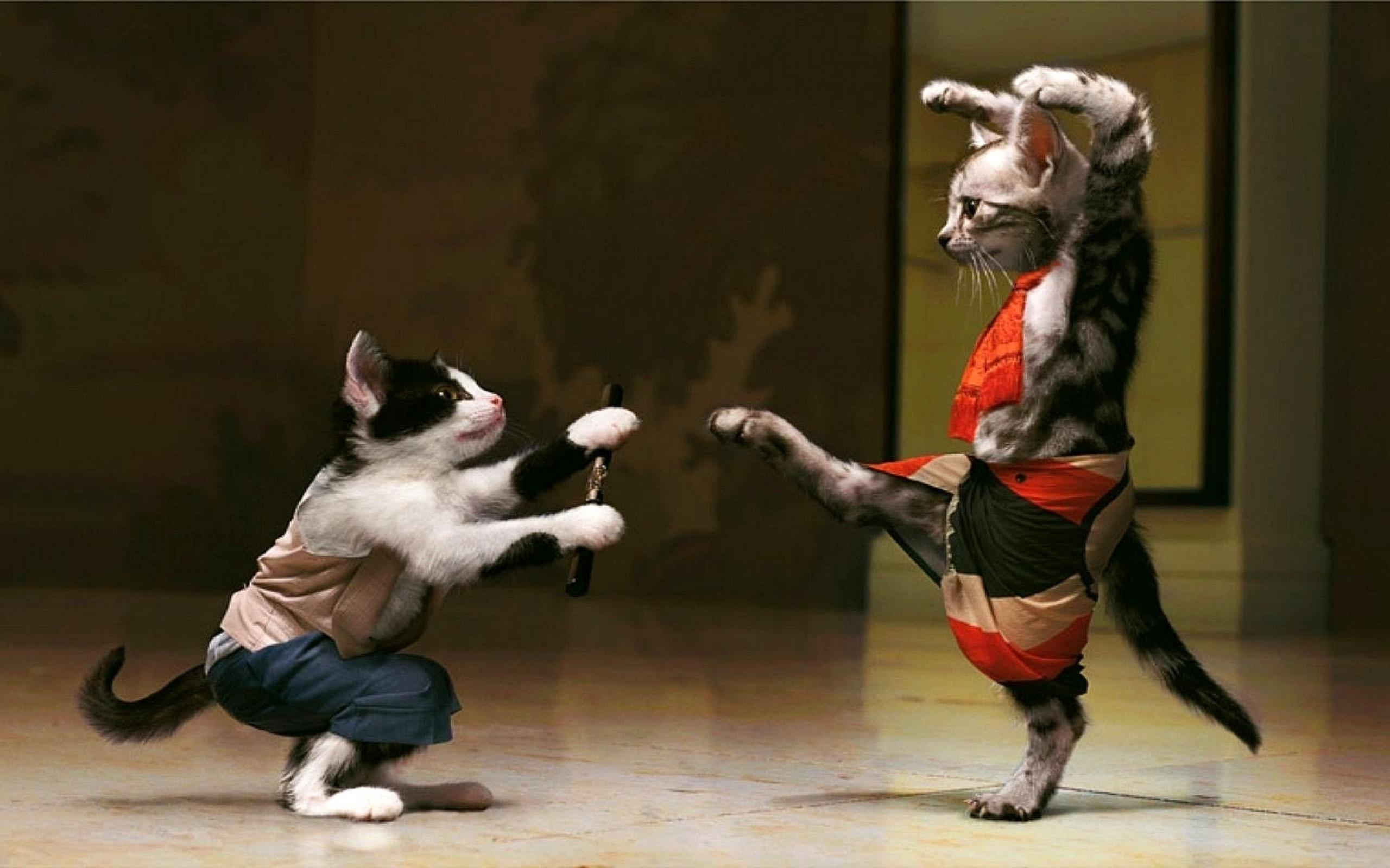 Image result for cat fight funny