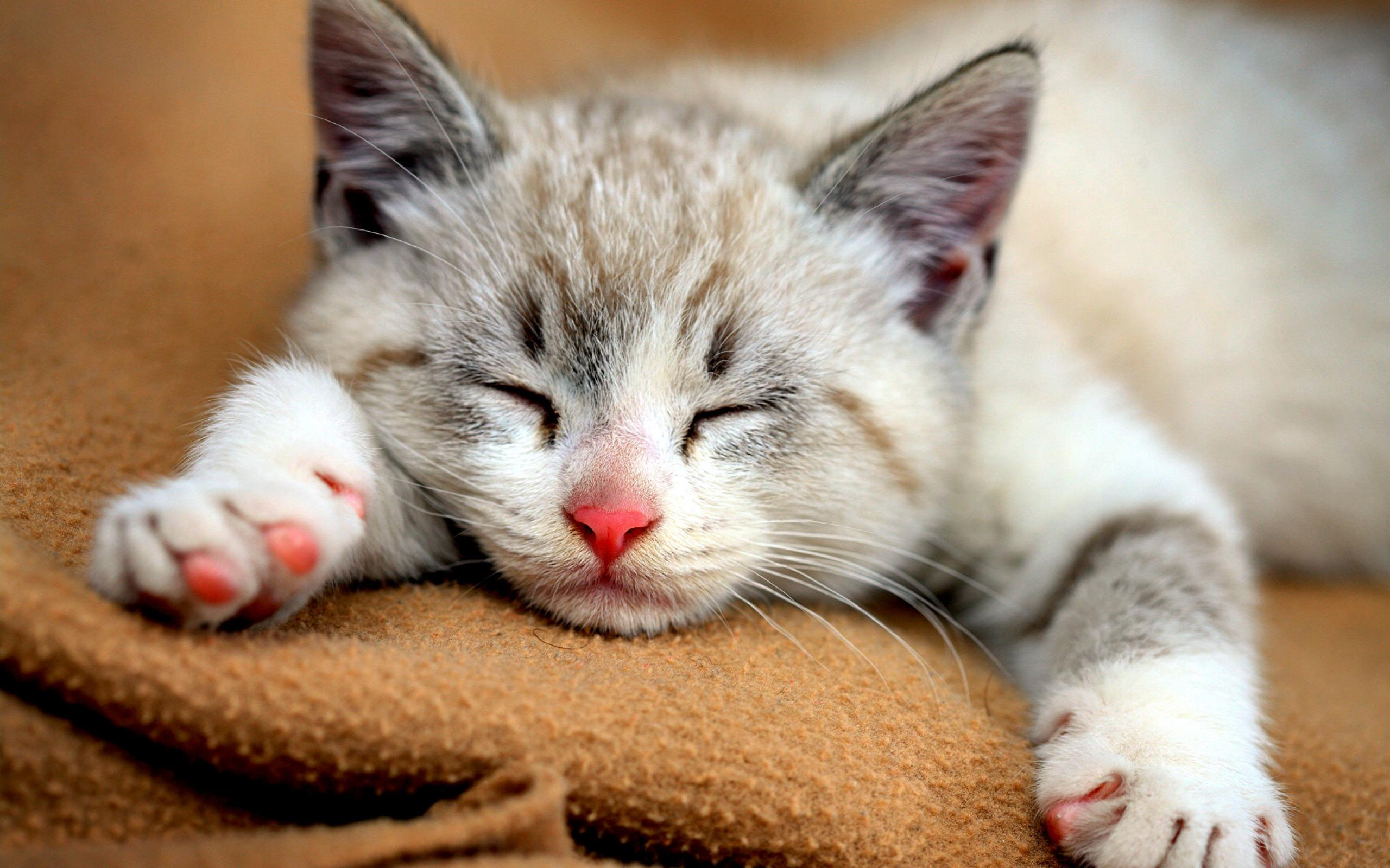 Cute Baby Kitten Cat Sleeping Laughsparkcom