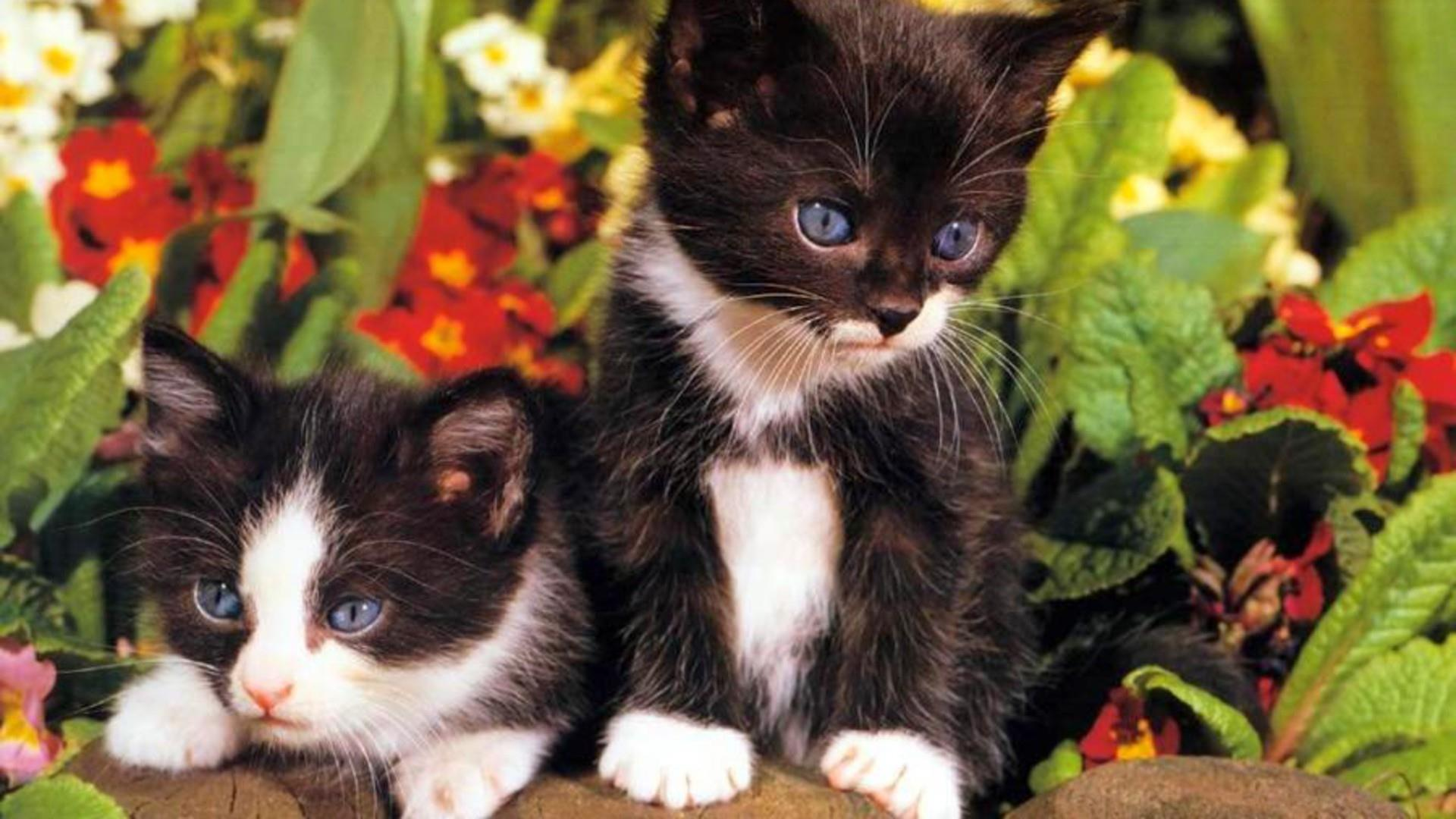 Cute Black and White Kittens