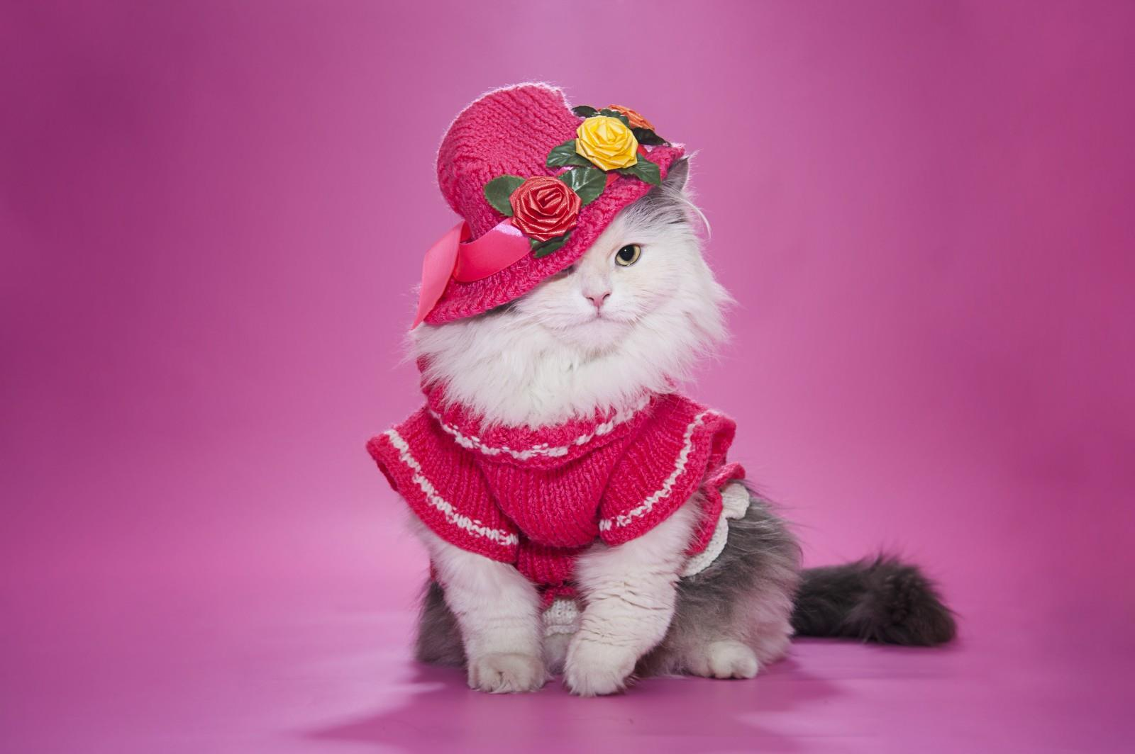 Cute Cat image in pink dress and hat