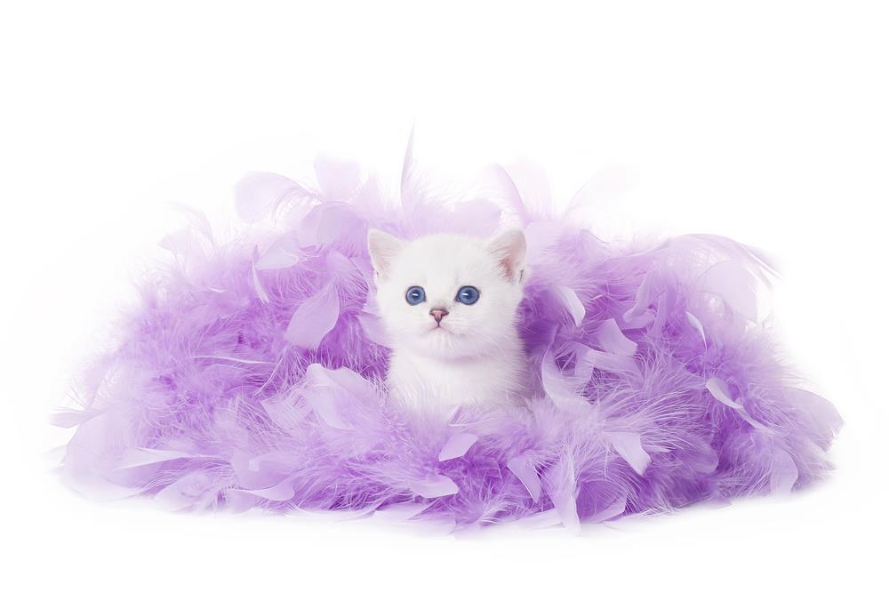 Cute Cat Kitten Image Look Like British Princes With