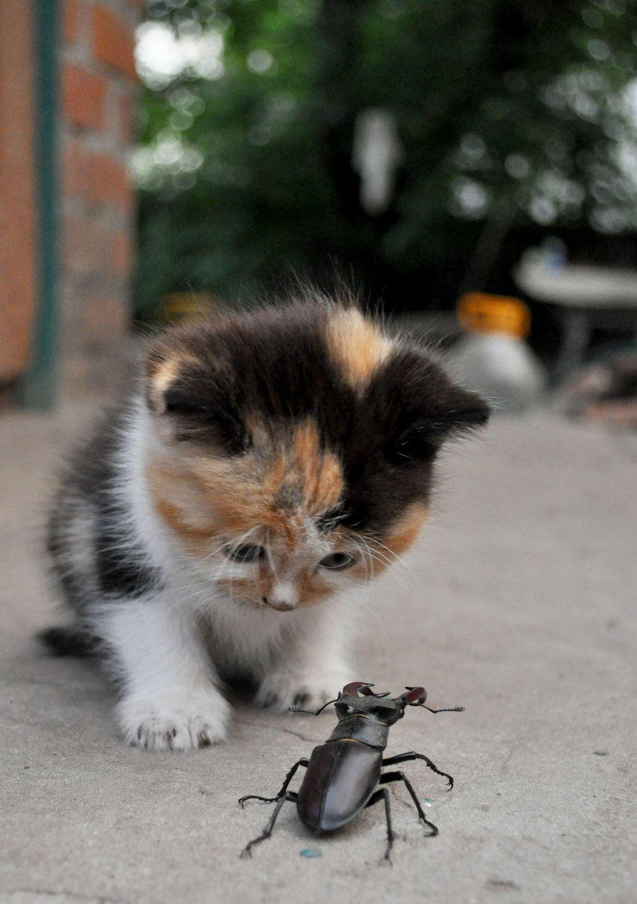 cute cat looking amazingly towards the enemy
