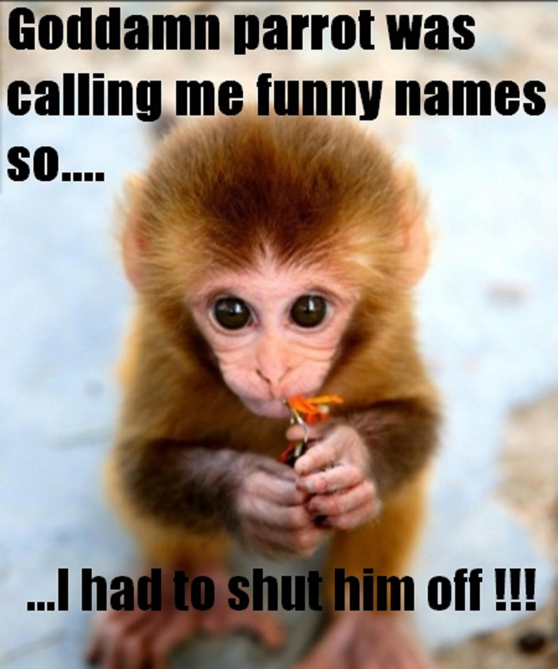 funny baby monkey feeling guilty pictures with captions