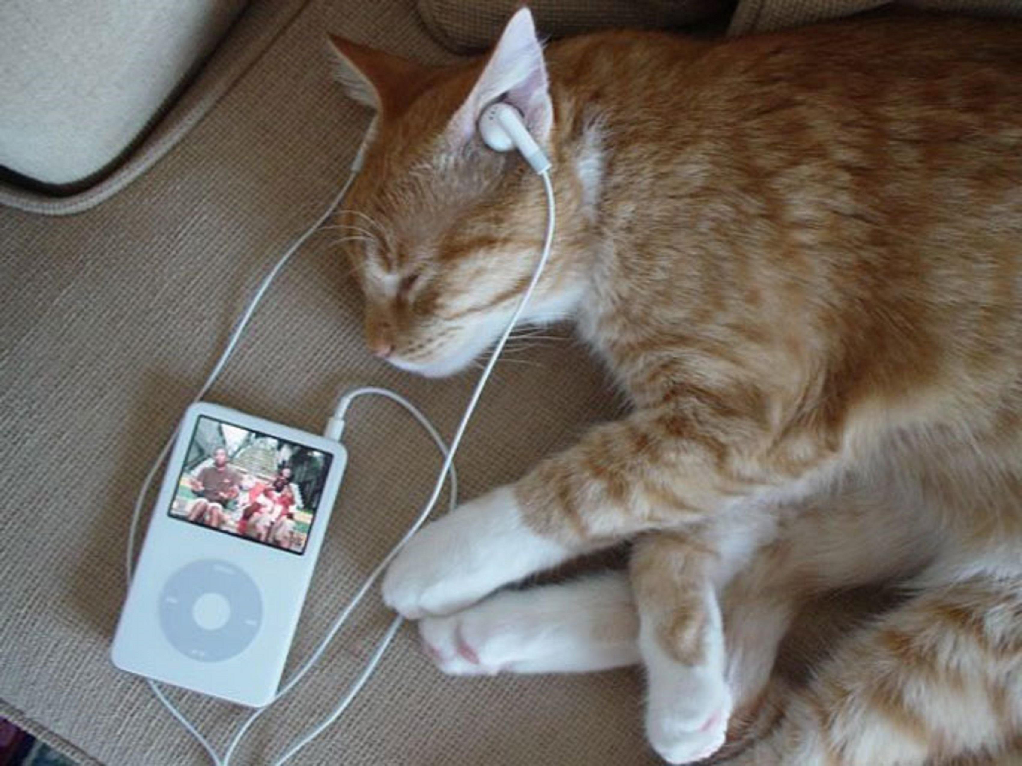 Spooked Cat Gif Funny Cat Listening Songs From