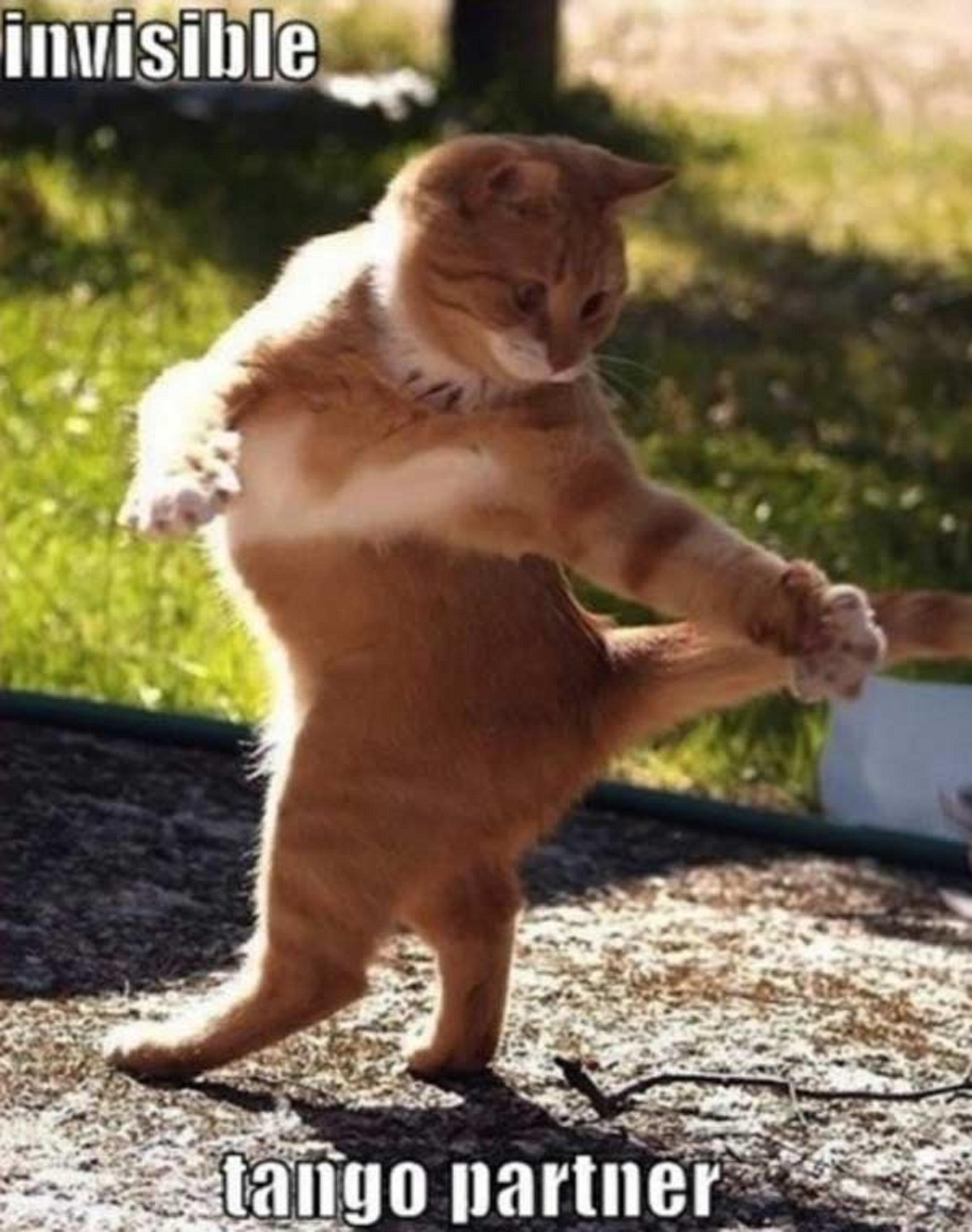 Funny Cat Looks Like Dancing Doing Invisible Things