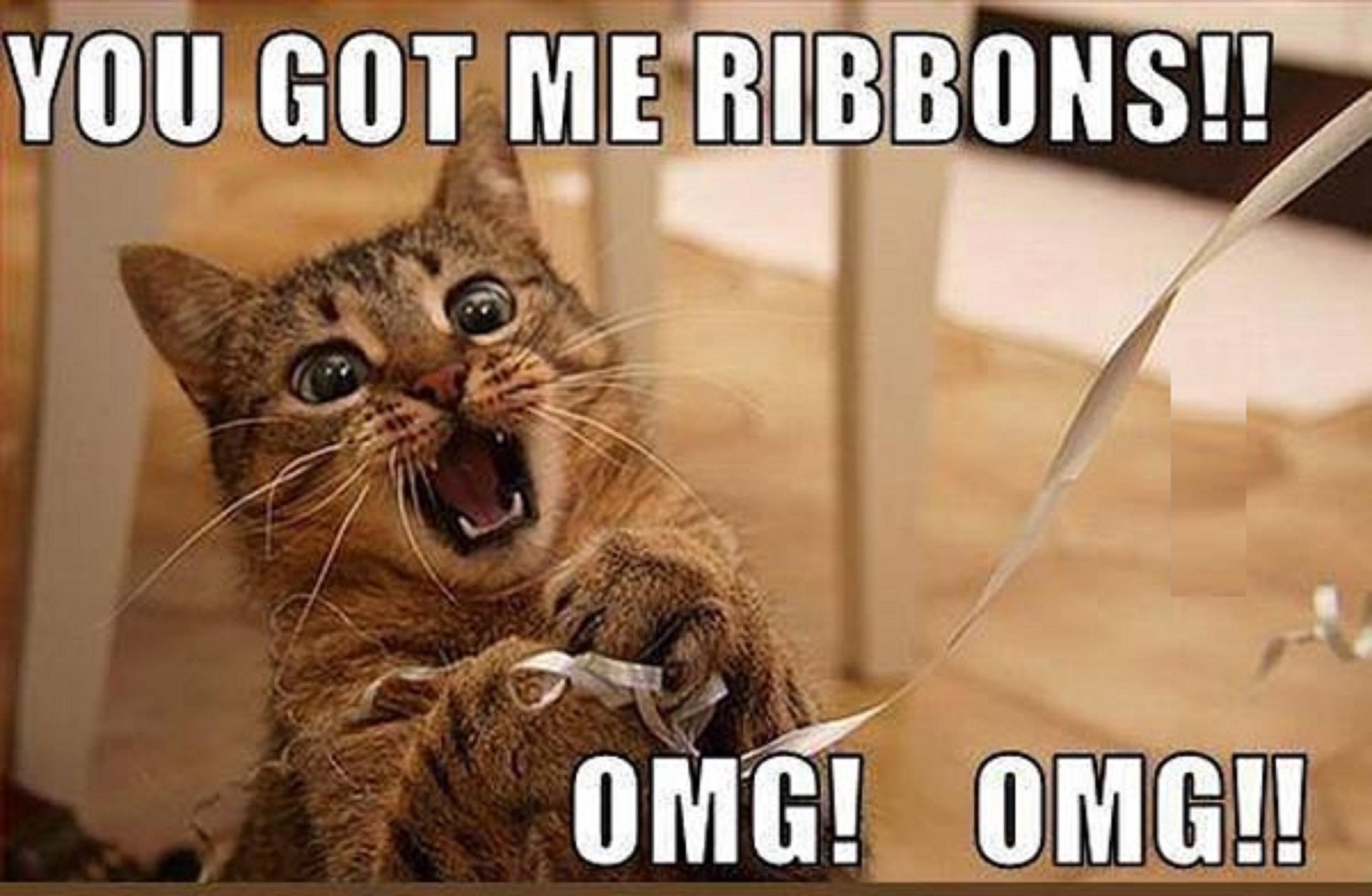 Funny Cat Ribbons Meme