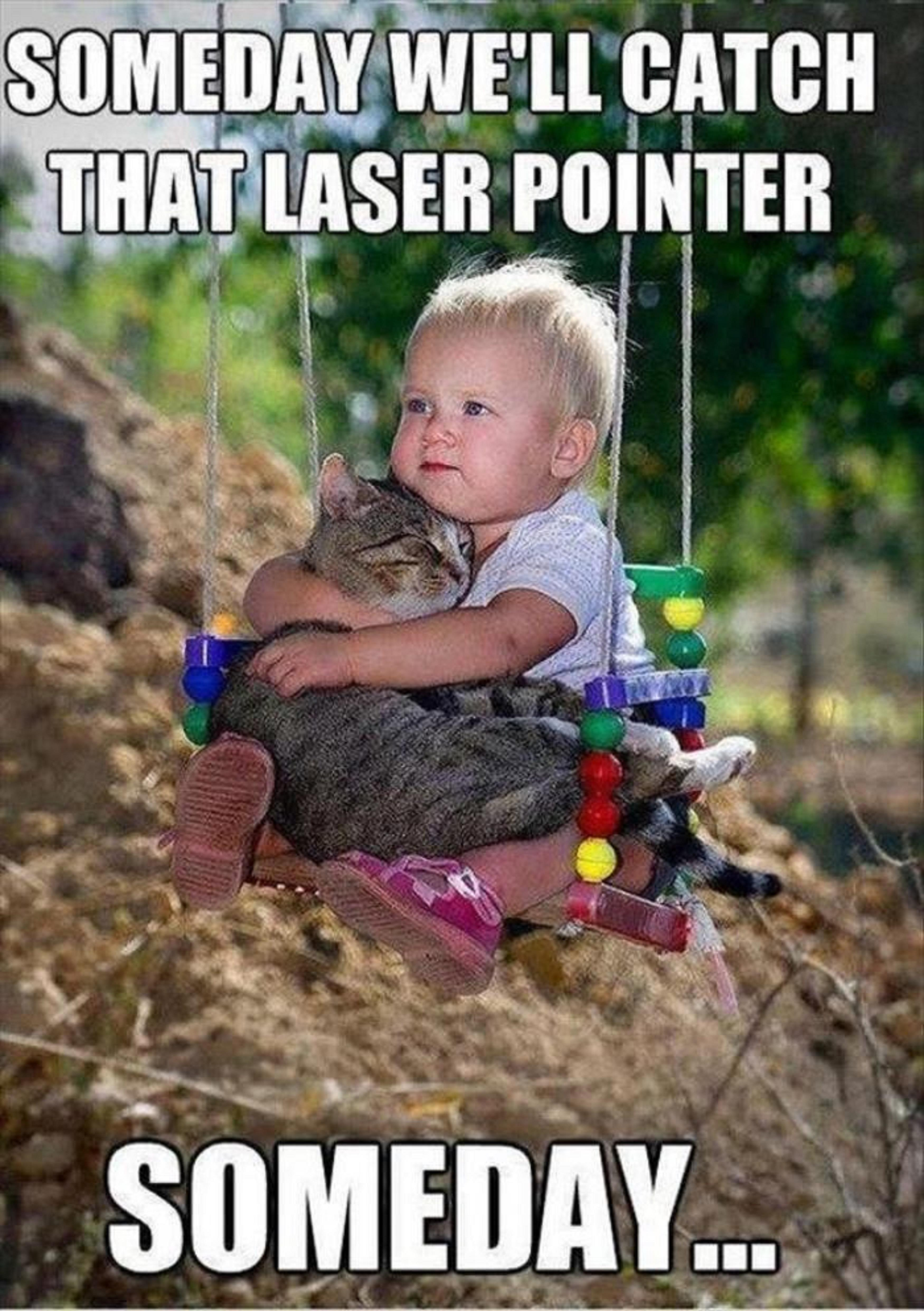 Funny Memes For Teenagers : Funny cats cute meme kids laser pointer