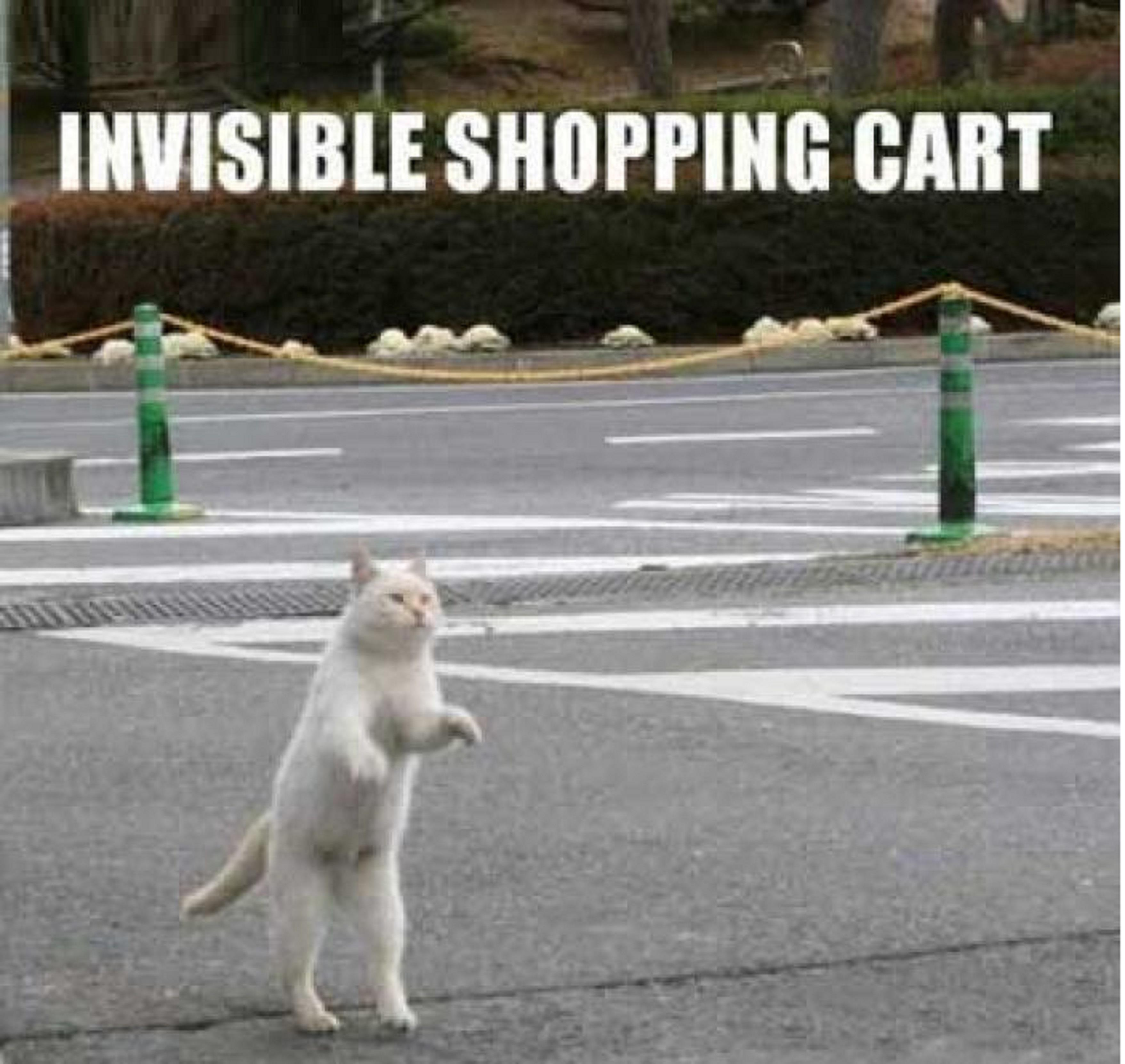 Funny Cats Doing Invisible Things