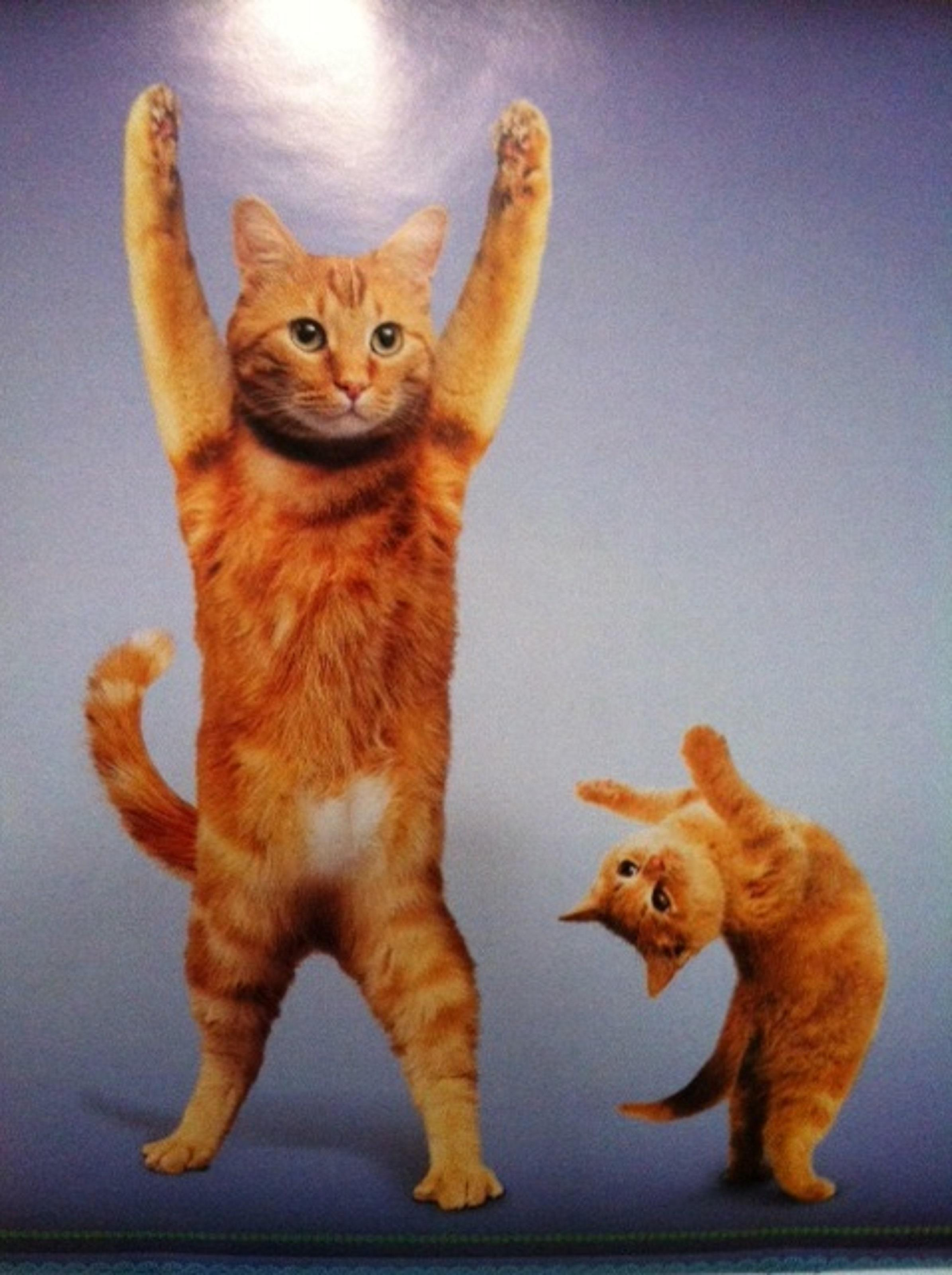 Funny Cats Doing Yoga Poses