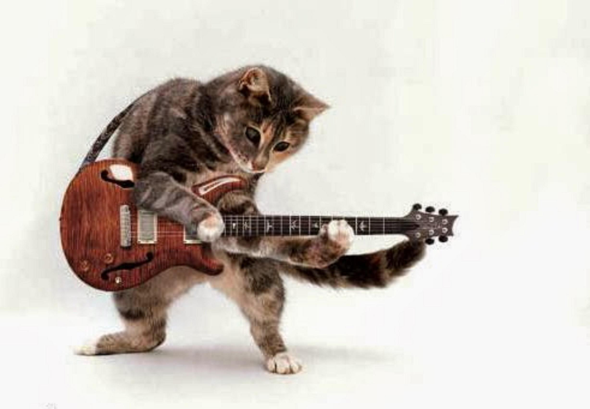 Funny Cats Playing Guitar New Nice Images